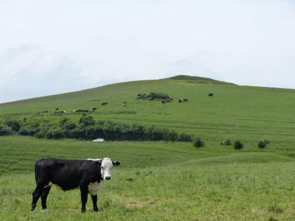 Stonehenge and Avebury Tours - A pastoral scene at Adam's Grave
